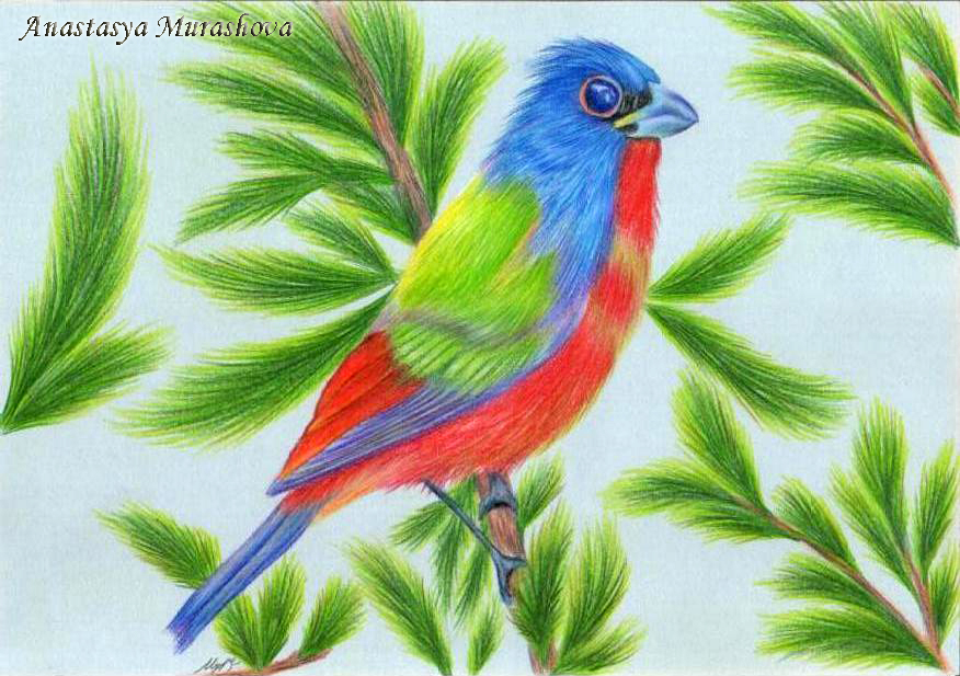 876x617 Drawing A Bird With Colored Pencils, Using Painted By Anastasya