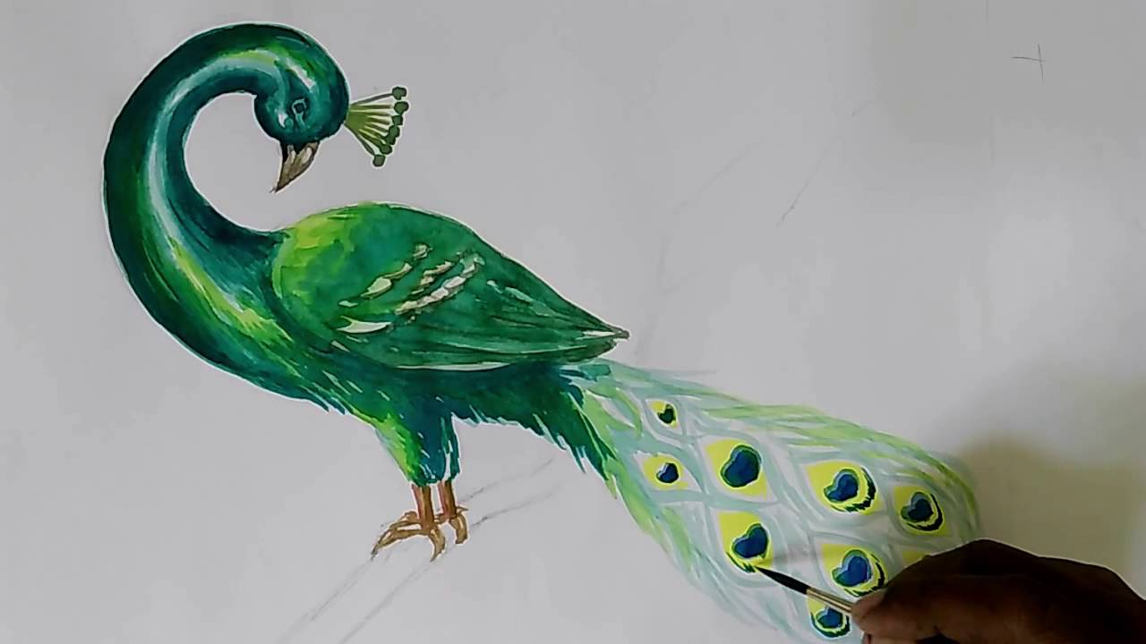1280x720 How To Draw Peacock In Water Colour