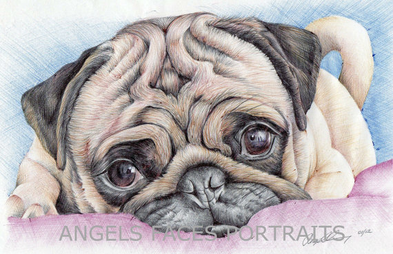 570x369 Pug Drawing In Colour Biro By Angelfaces1986