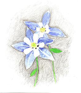 264x300 Columbine Flower Drawings Fine Art America