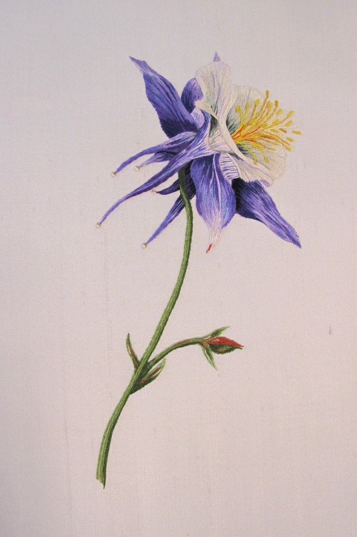 Columbine Flower Drawing At Getdrawings Free For Personal Use