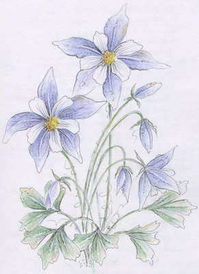 291x400 Image Result For Columbine Flower Illustration Columbines
