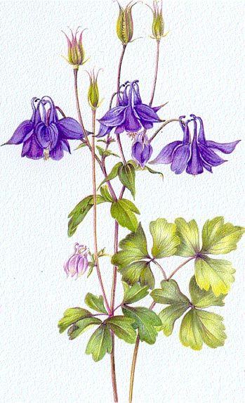 349x573 Madwickedawesome Arts Botanical Drawings
