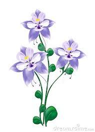 190x265 Columbine Flower Drawing