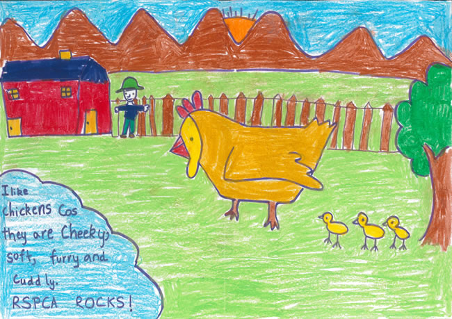650x459 Competitions Rspca Drawing Competition Winner Amp Runner Up Ages
