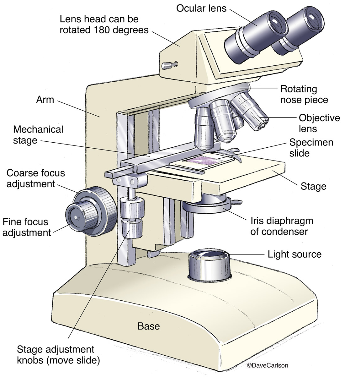 compound microscope worksheet the best and most comprehensive worksheets. Black Bedroom Furniture Sets. Home Design Ideas