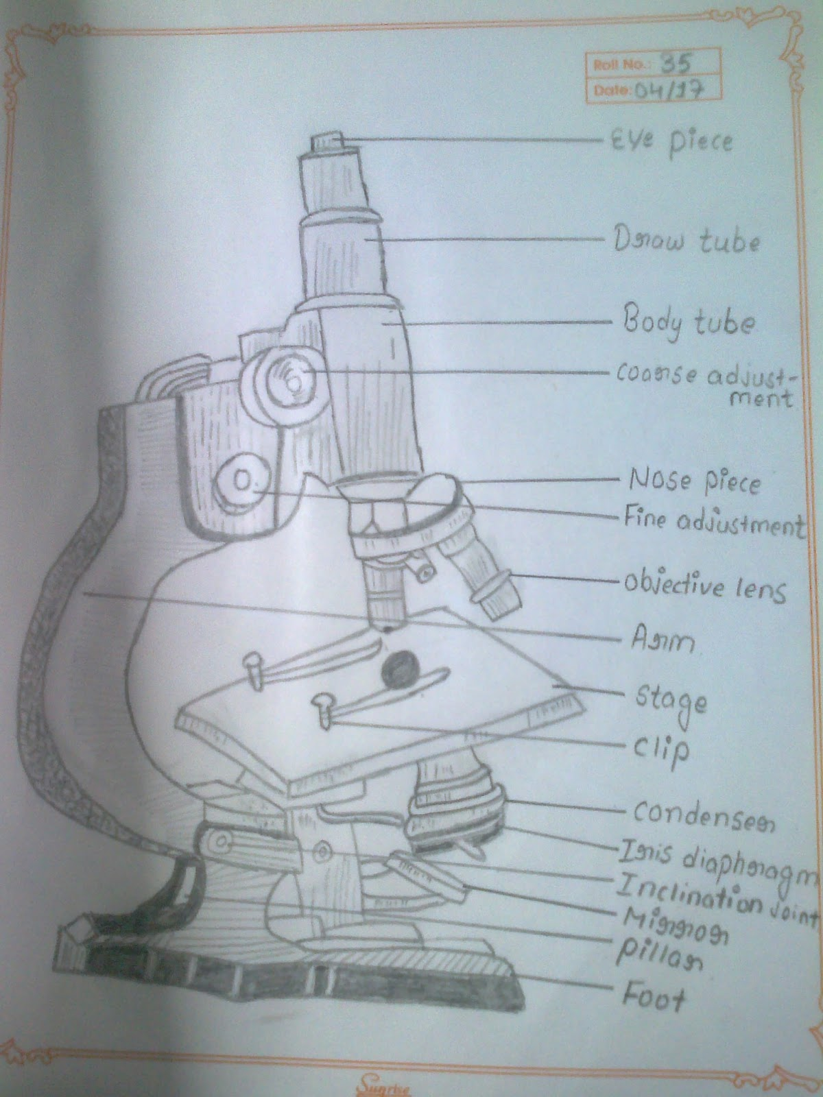 Compound Microscope Drawing at GetDrawings.com   Free for personal ...