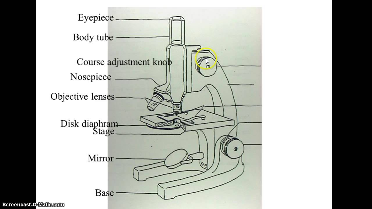 Compound Microscope Drawing At Free For Personal Wiring Diagram 1280x720