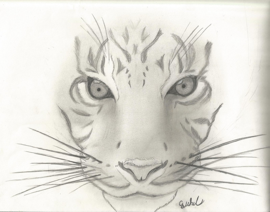 Cool Animal Drawing at GetDrawings | Free download