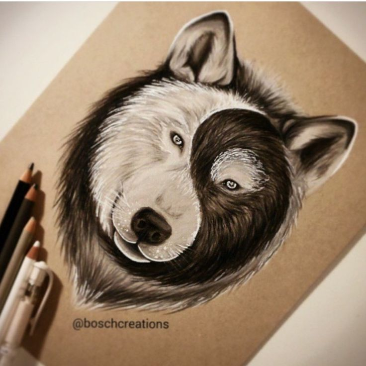 736x736 Image Result For Interesting Art Drawings Of Animals Ideas