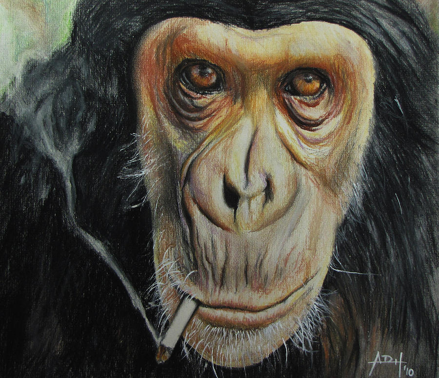 900x775 Smokin' Cool Monkey Pastel By Angela Hannah