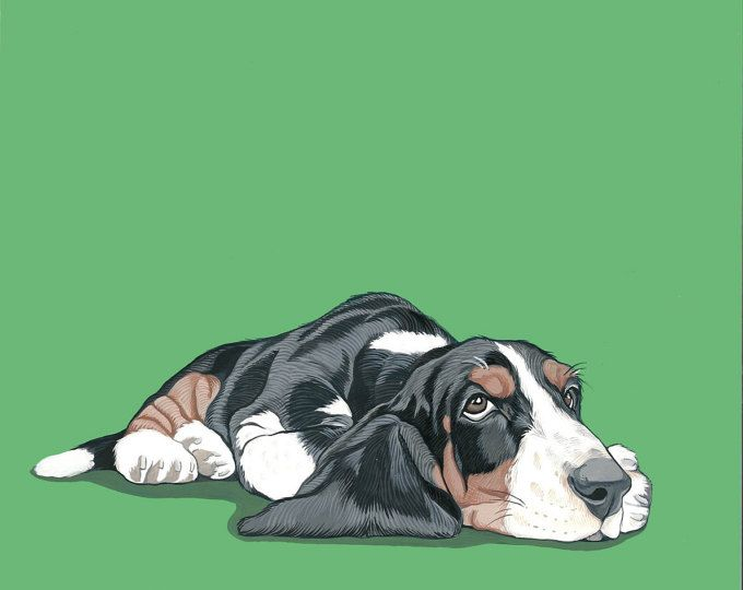 680x540 534 Best Basset Hound Drawings Images On Basset Hound