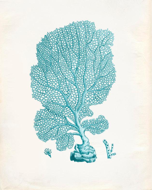 629x786 Vintage Sea Fan Coral Print 8x10 P195