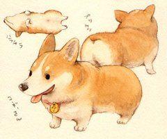 240x200 Short Corgi Illustration Illustrations Corgi