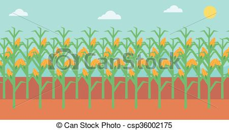 450x255 Background Of Corn Field. Background Of Corn Field Vector