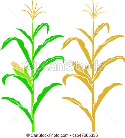 corn stalk drawing at getdrawings com free for personal use corn rh getdrawings com corn stalks clipart black and white corn stalks clipart black and white