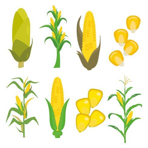 490x490 Colored Hand Drawn Corn Stalks Vector Illustration