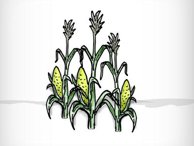 400x300 Corn Stalks By April Harris