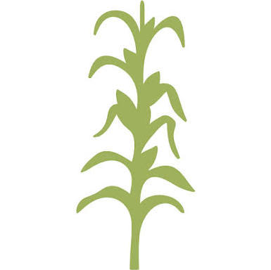 corn stalks drawing at getdrawings com free for personal use corn rh getdrawings com corn stalk bundle clipart corn stalk clipart black and white