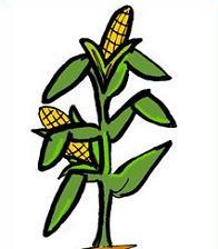 196x224 Corn Stalk Clipart