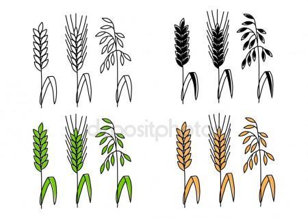 450x318 Corn Stalk Cartoon Stock Vectors, Royalty Free Corn Stalk Cartoon