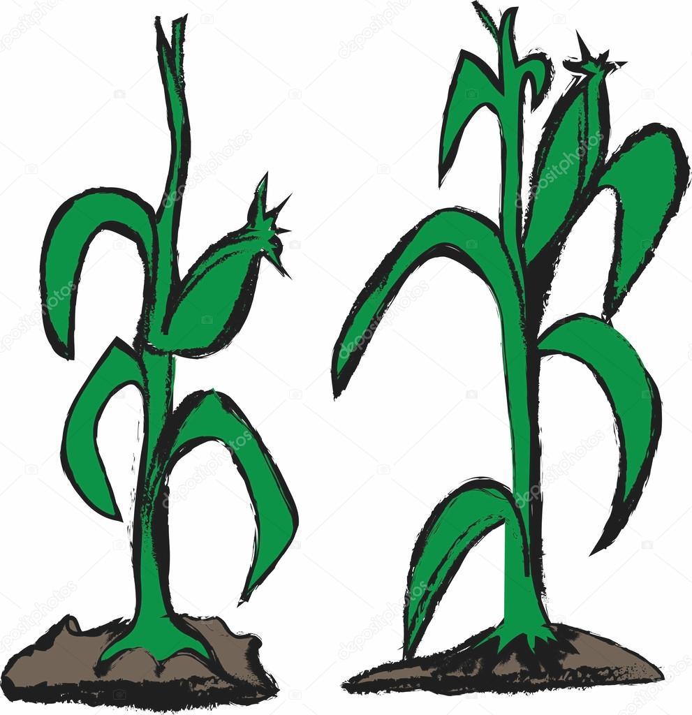 991x1024 Doodle Corn Stalk Stock Photo Dusan964
