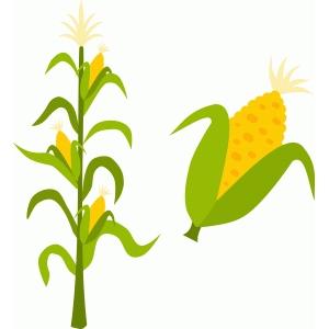 300x300 Corn Stalk