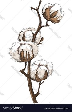 236x364 Image Result For Cotton Plant Drawing Cotton
