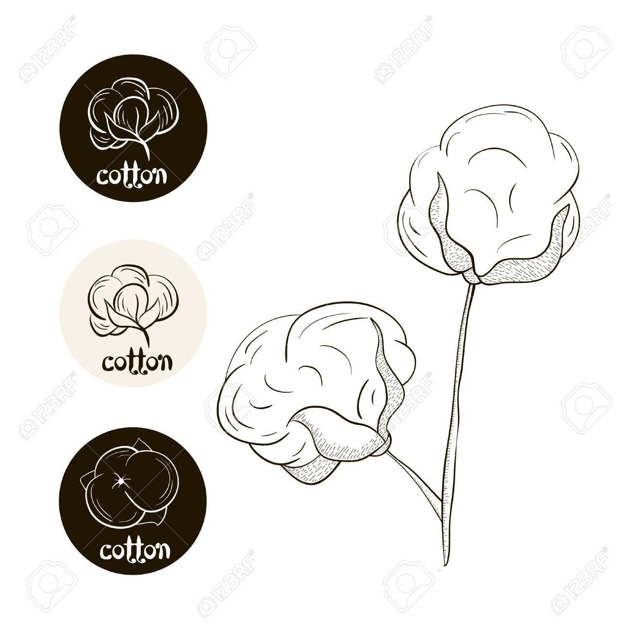 1300x1300 Vector Collection Of Cotton Badges. Hand Drawn Plant Cotton