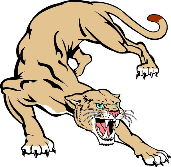600x585 Cougar mascot Cougar Drawing Mascot Cougar Team Mascot Color