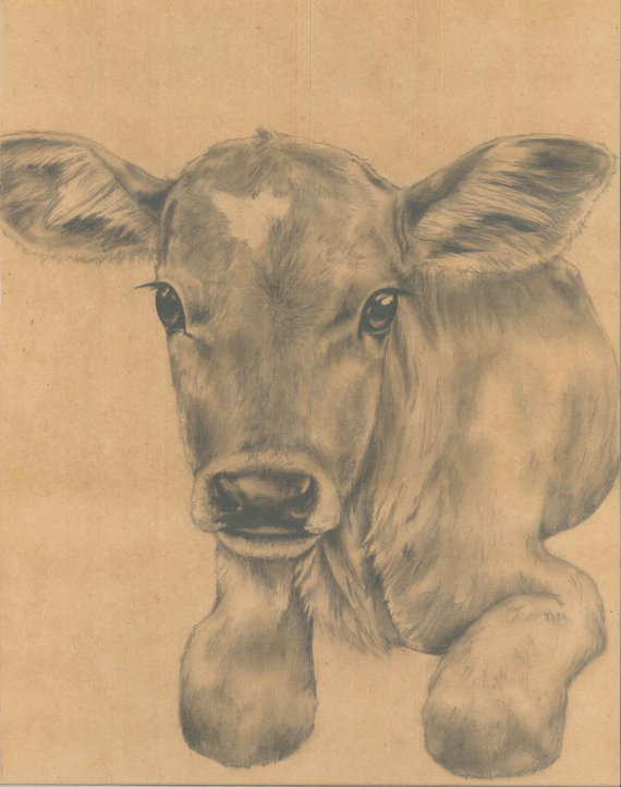 570x722 Baby Cow Calf Original Art Drawing By Lauraboyea On Etsy, $150.00
