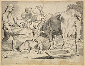 300x231 Cow And Calf Drawings Fine Art America