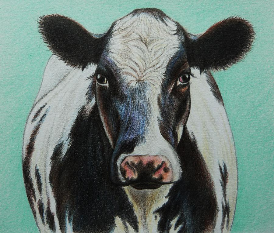 900x763 Cow Drawing By Lucy Deane