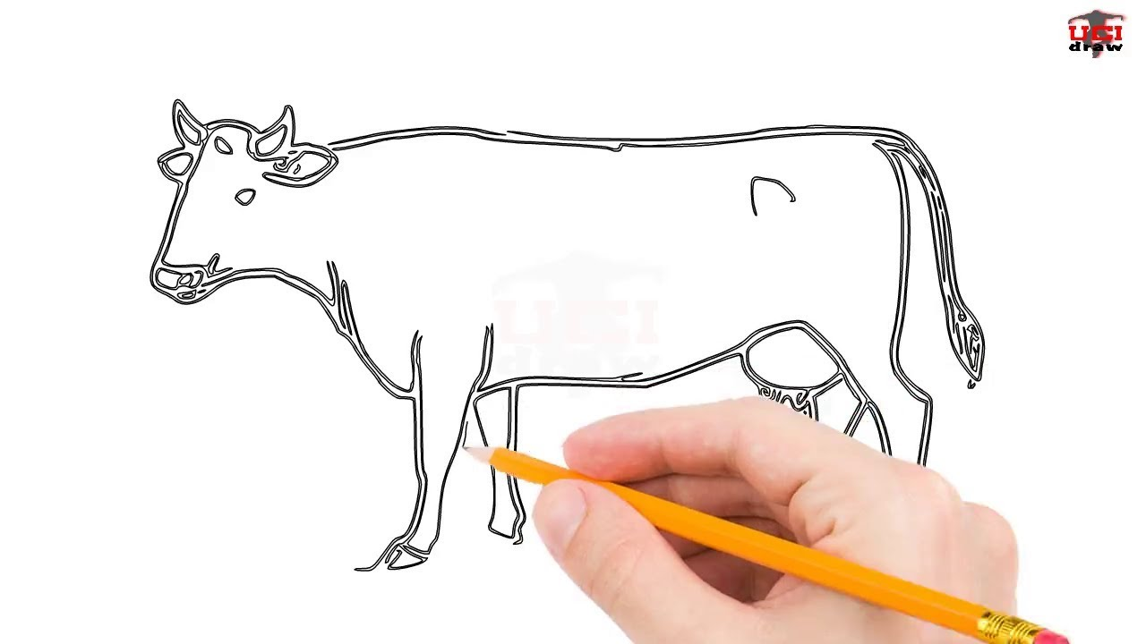 1280x720 How To Draw A Cow Step By Step Easy For Beginnerskids Simple