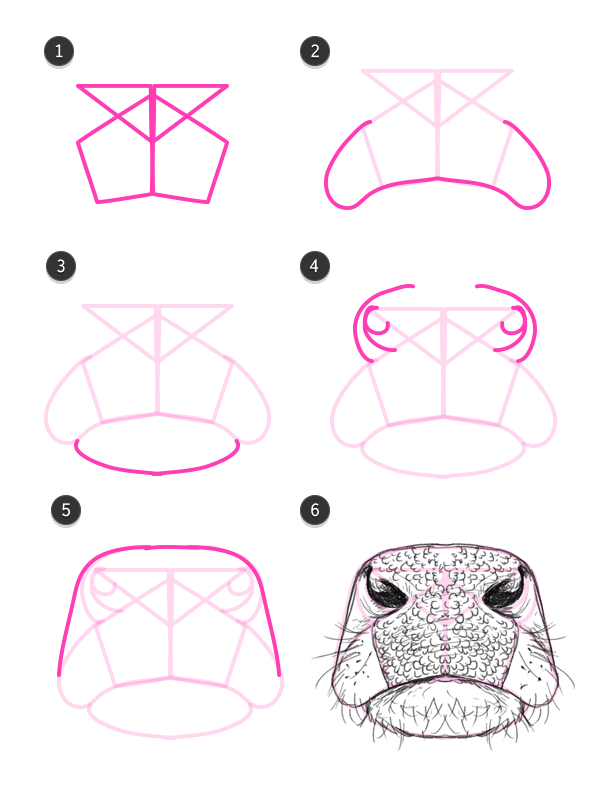 600x788 How To Draw A Cow Nosemouth