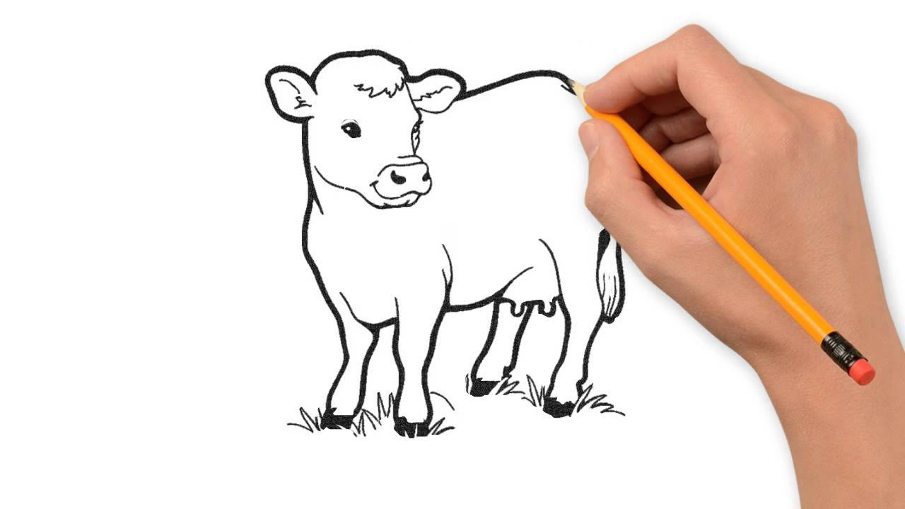 1280x720 Cow Animals Pencil To Draw Step By Step