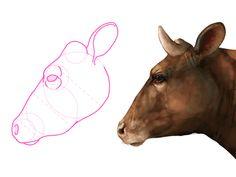 236x177 How To Draw Cow Head 8 Farm Animal Artwork Cow