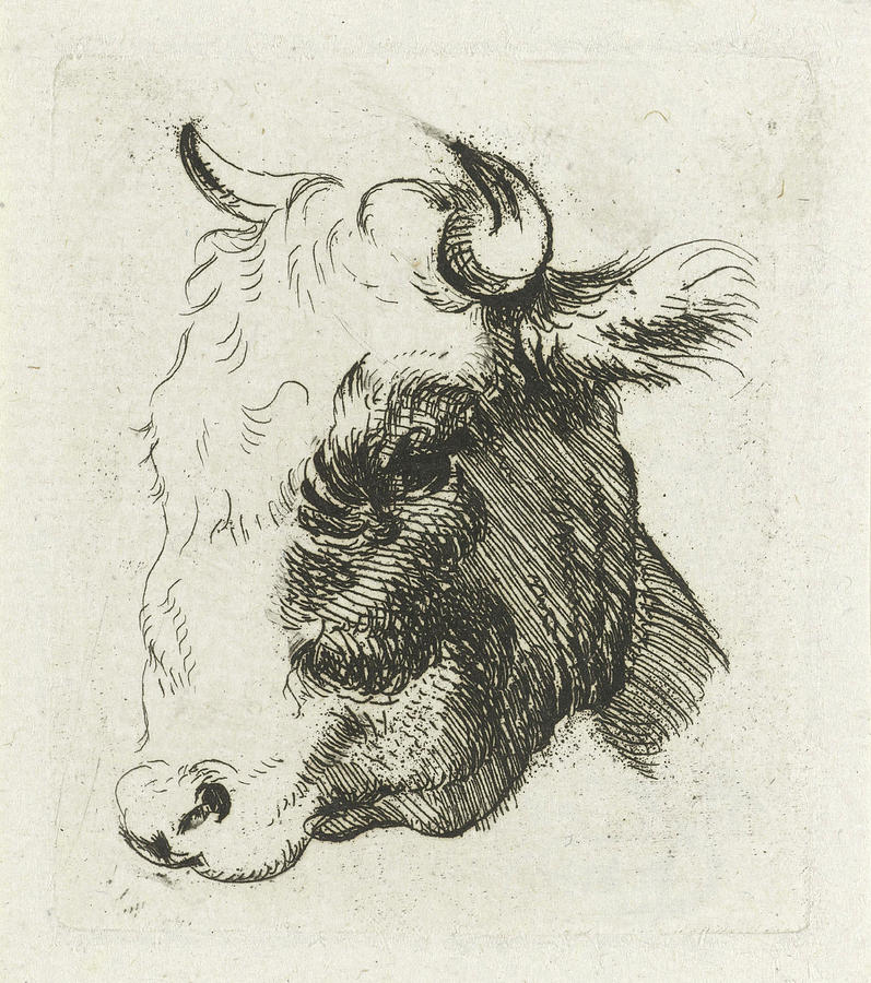 797x900 Study Sheet With A Cows Head Drawing By D. Merrem