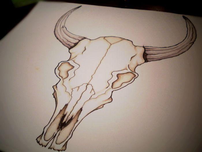 700x525 Drawings Of Cow Skulls