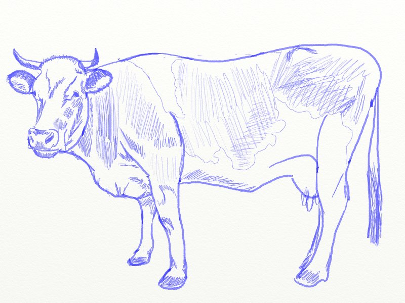 800x600 How To Draw A Cow