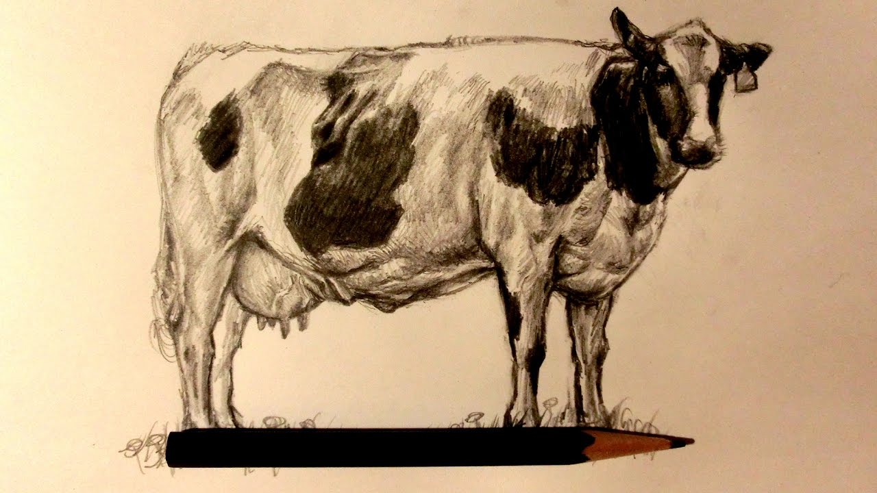 1280x720 Asmr Pencil Drawing 75 Dairy Cow (Request)