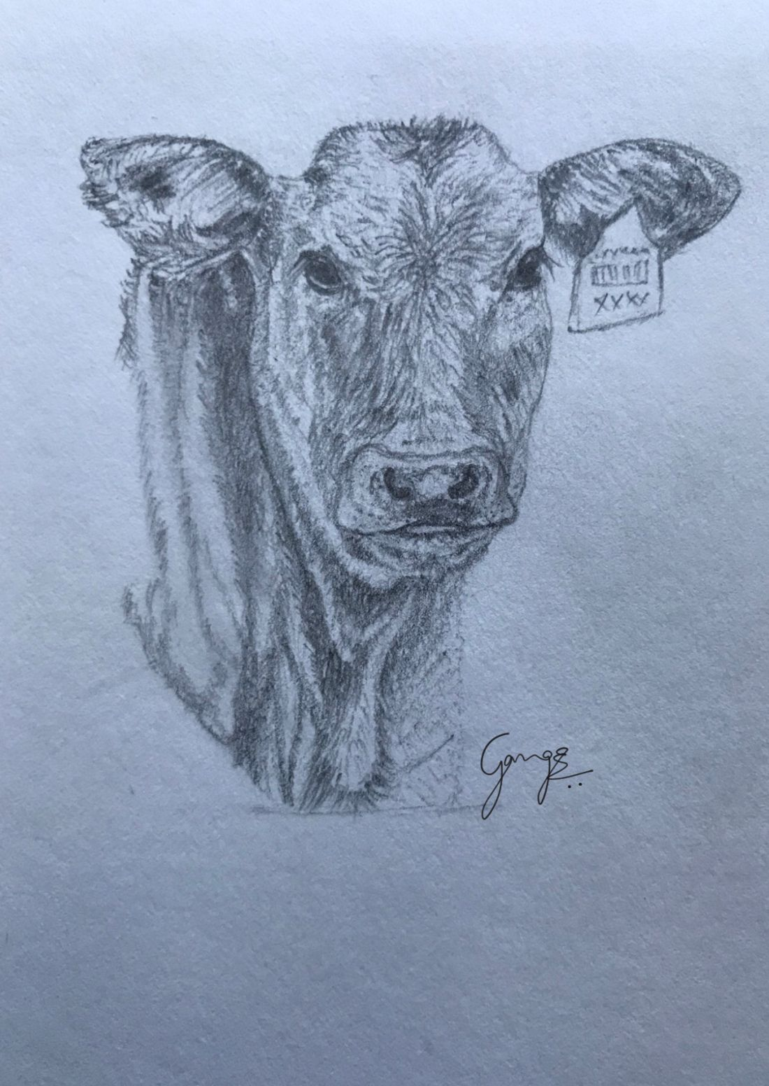 Cow Pencil Drawing at GetDrawings com | Free for personal