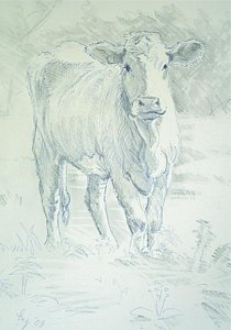 210x300 Cow Pencil Drawing Drawings