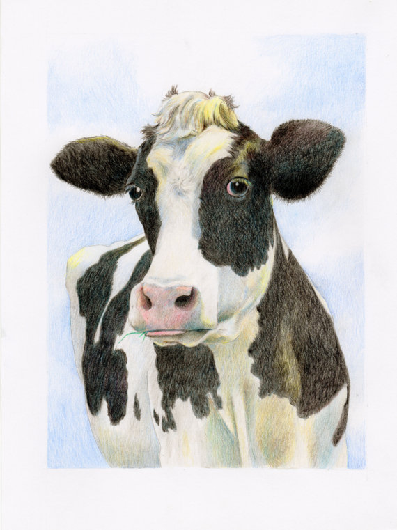570x761 Cow Drawing, Colored Pencil Colored Pencil Drawings, Colored