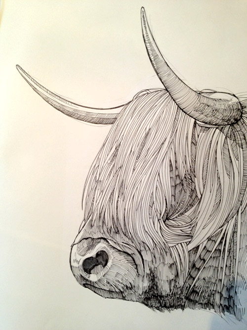 500x667 Highland Cow. Point Five Pencil