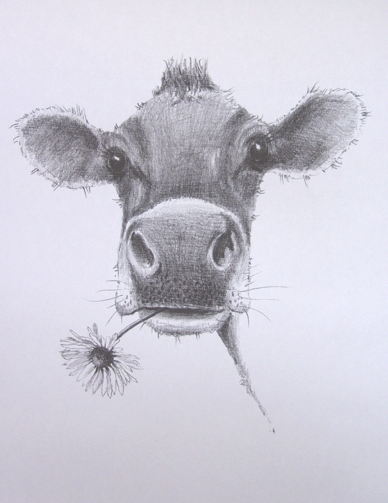 790x1024 Pencil Drawings Of Cows Drawings Old David Smith Art