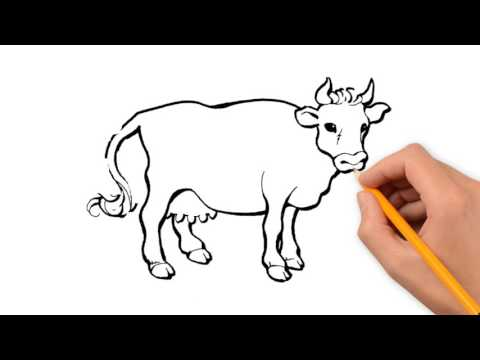 480x360 Cow Animals Pencil To Draw Step By Step