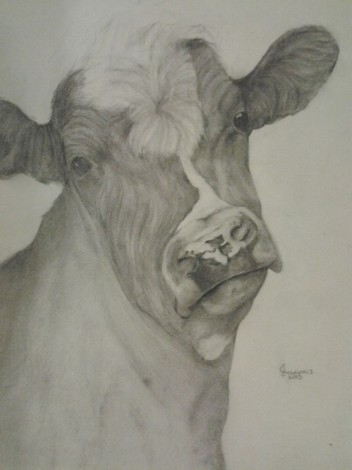 720x960 Pencil Drawing Of Cow By Jessesmithxxoo
