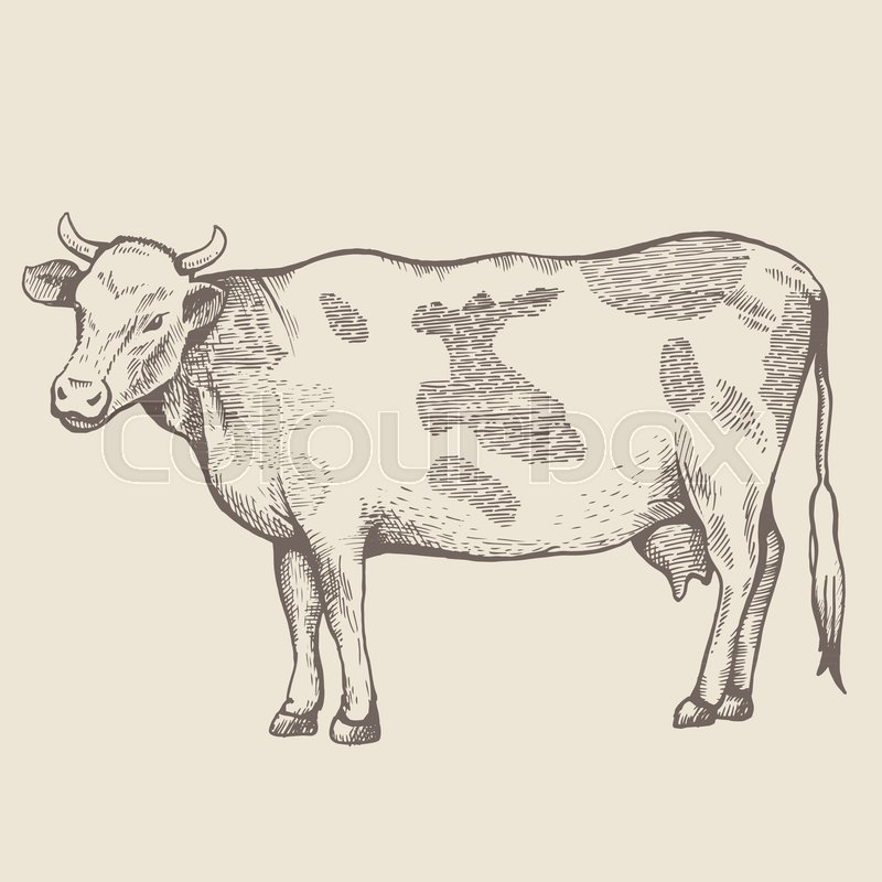 800x800 The Spotted Cow Is Standing. View In Profile. The Drawing Is Drawn