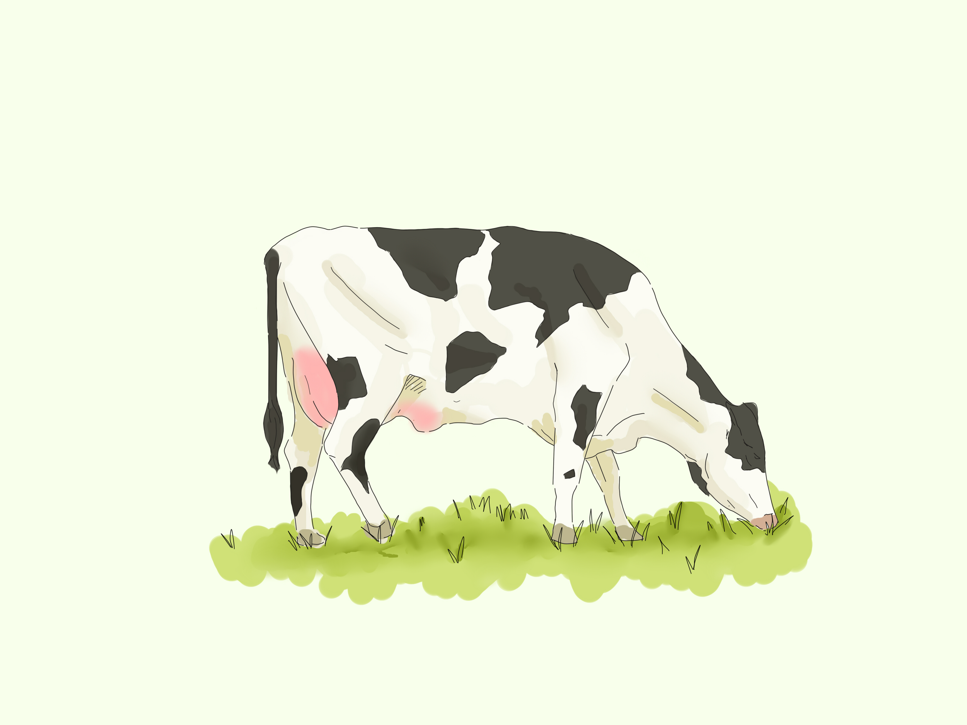 3200x2400 Characteristics That Cows Have. How To Draw A Cow Step By Step